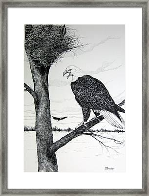 Eagle At Nest Framed Print