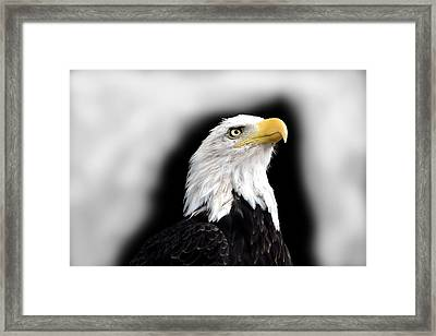 Eagle Framed Print by Barry Shaffer