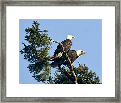Eagle Conversation Framed Print