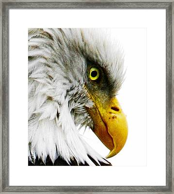 Framed Print featuring the digital art Eagle Eye by Carrie OBrien Sibley