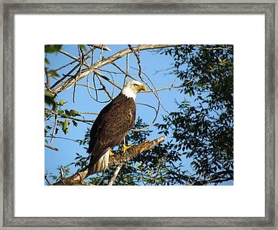 Eagle Eye Framed Print by Christine Hafeman