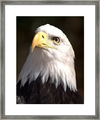 Eagle Eye Framed Print by Marty Koch