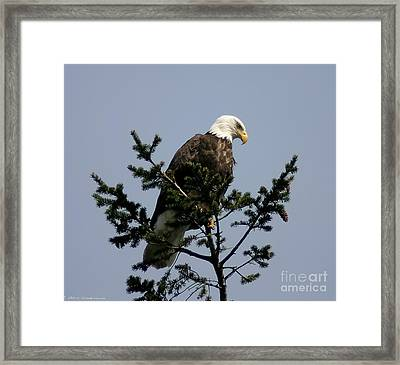Framed Print featuring the photograph Eagle Eye Vista by Mitch Shindelbower