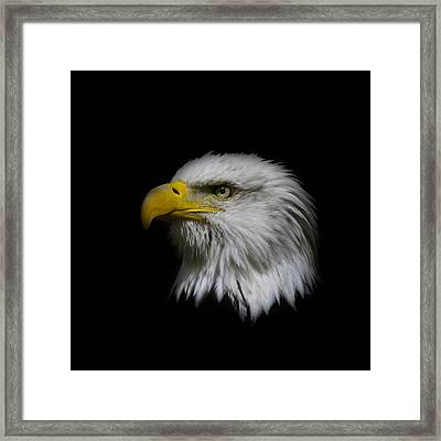 Framed Print featuring the photograph Eagle Head by Steve McKinzie