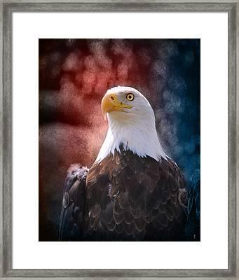 Eagle I Framed Print by Jai Johnson