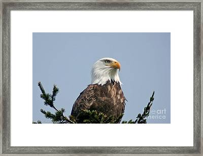 Framed Print featuring the photograph Eagle  by Mitch Shindelbower