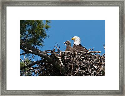 Eagle Nest Framed Print