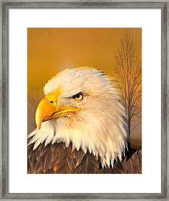 Eagle On Guard Framed Print by Marty Koch