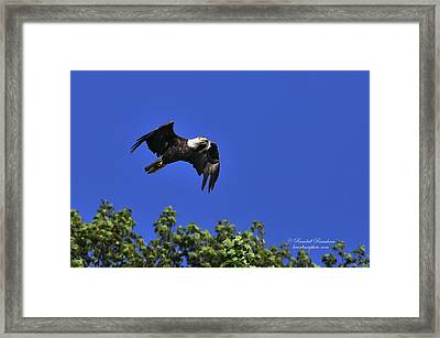 Framed Print featuring the photograph Eagle Over The Tree Top by Randall Branham