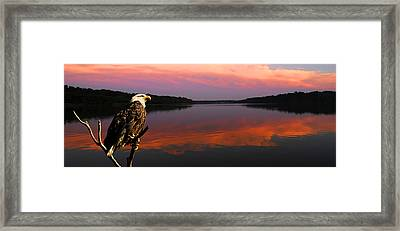 Framed Print featuring the photograph Eagle Overlooking Domain by Randall Branham
