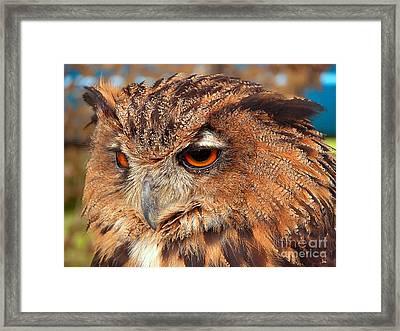 Eagle Owl Framed Print by Graham Taylor