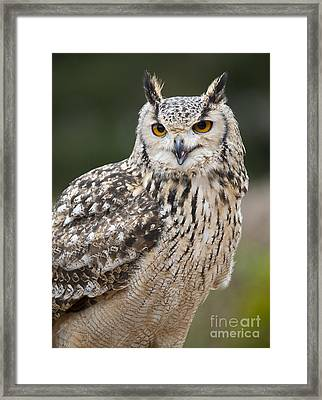 Eagle Owl II Framed Print