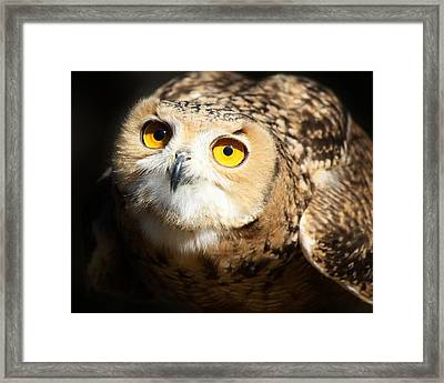Eagle Owl Framed Print by Paulette Thomas