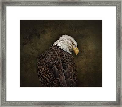 Eagle Profile Framed Print