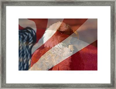 Eagle Framed Print by Rebecca Frank