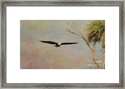 Eagle Soft Glide Framed Print by Deborah Benoit