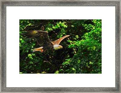 Framed Print featuring the photograph Eagle Taking Lunch To Her Babies by Randall Branham
