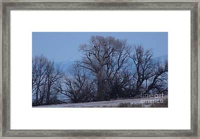 Eagle Tree Framed Print by David Bearden
