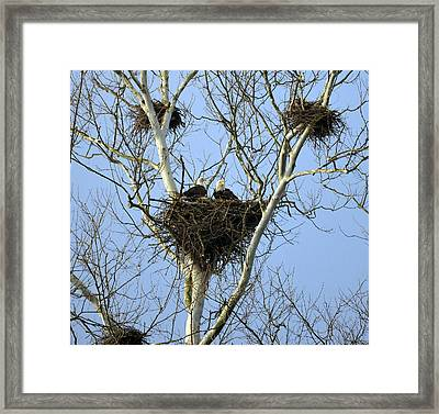 Framed Print featuring the photograph Eagles Lair by Brian Stevens