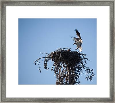 Eagle's Nest Framed Print by Ralf Kaiser