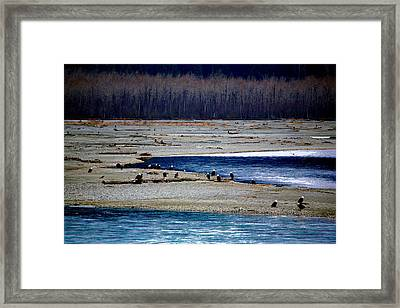 Framed Print featuring the digital art Eagles Of The Chilkat by Carrie OBrien Sibley