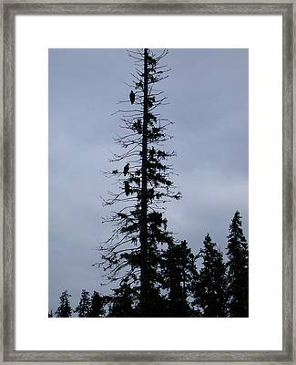 Eagles Silhouette Framed Print