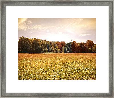 Early Autumn Harvest Landscape Framed Print by Jai Johnson