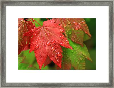 Early Autumn Framed Print by Lee Amerson