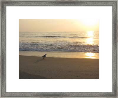 Early Bird Framed Print by Jenna Mackay