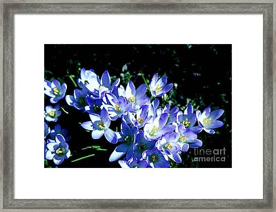 Early Blooms Framed Print by Rick Bragan