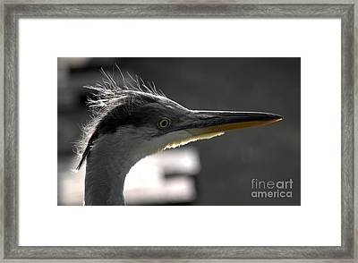 Early In The Morning Framed Print by Andreas Berheide