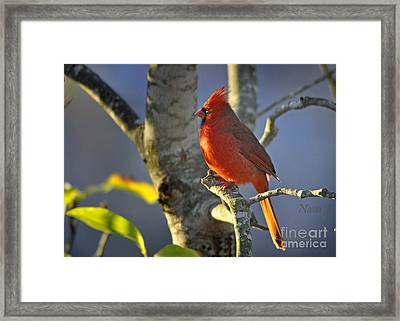 Framed Print featuring the photograph Early Morning Cardinal by Nava Thompson
