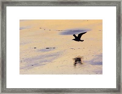 Early Morning Flight Framed Print