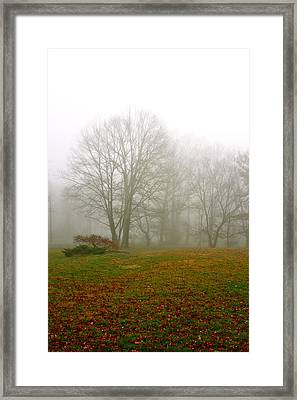 Early Morning Fog Framed Print by Ann Murphy