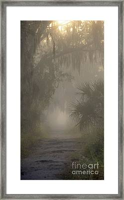 Early Morning Path Framed Print