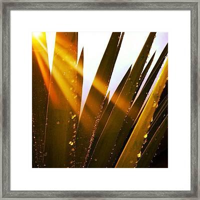 Early Morning Sun Framed Print