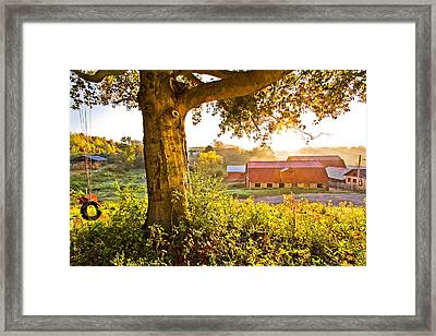 Early Morning Swing Framed Print