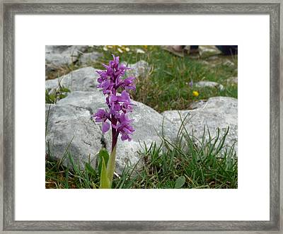 Early Purple Orchid Framed Print by Rob Hemphill