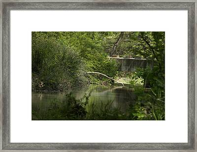 Early Spring Creek Framed Print by Cindy Rubin