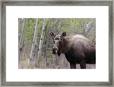 Framed Print featuring the photograph Early Spring by Doug Lloyd