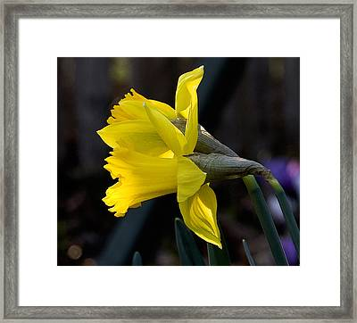 Early Spring Framed Print by Michael Friedman
