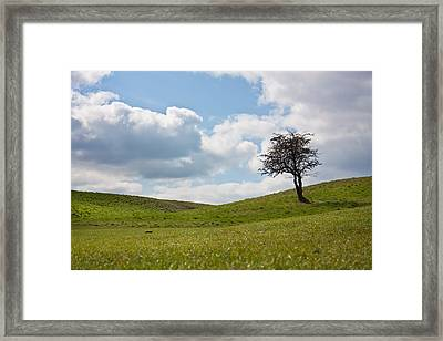 Early Spring Framed Print by Semmick Photo