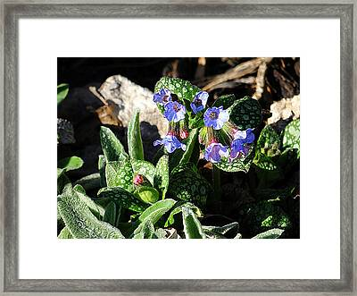 Early Spring Textures Framed Print by Beth Akerman