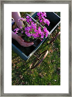Early Spring Treasure Framed Print