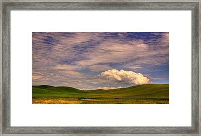 Early Summer Wheat In The Palouse Framed Print by David Patterson
