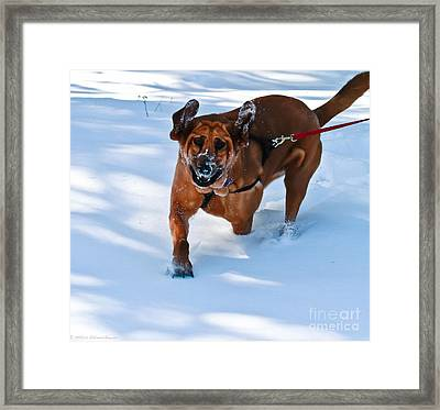 Ears And Teeth  Framed Print