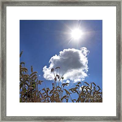 Ears Of Wheat Under A Blue Sky With A Single Cloud Framed Print