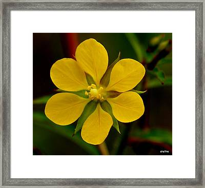 Earth Laughs Through Weeds Framed Print