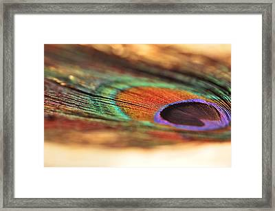 Earthy Feather  Framed Print by Puzzles Shum