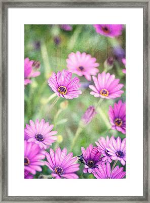 Easter Basket Framed Print by Joel Olives